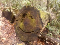 Rock Climbing Photo: Happy Log...