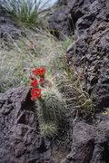 Rock Climbing Photo: Spring blooms.  May, 2010.