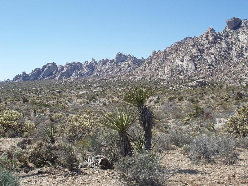 A High Desert Paradise