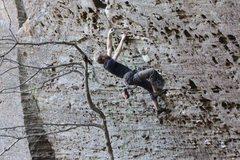 Rock Climbing Photo: Hippocrite (12.a) RRG