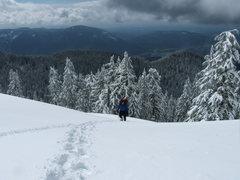 Rock Climbing Photo: Finally gained the ridge, nasty slog up.