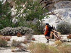 Rock Climbing Photo: ???, Joshua Tree NP