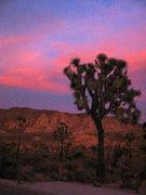 Rock Climbing Photo: No sunsets like J-Tree...