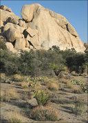 Rock Climbing Photo: Suprise Rock. Photo by Blitzo.