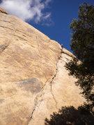 Rock Climbing Photo: Illusion Dweller (5.10a/b) in Joshua Tree, CA