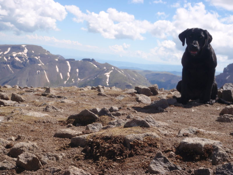 """Tipper"" at 14,015on top of Wetterhorn peak, CO"