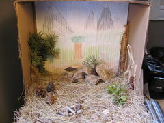 Marmot diorama.
