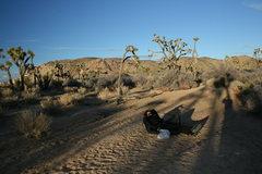 Rock Climbing Photo: Rasta relaxing in the shadows.