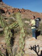 Rock Climbing Photo: cactus sneaking up on me while I admire Birdland