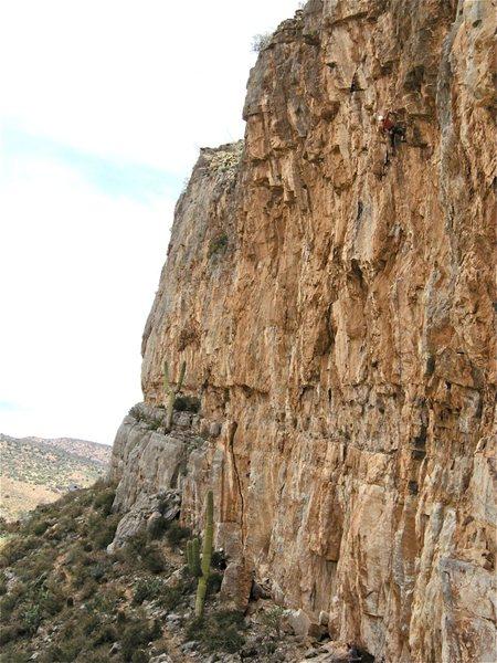 Rock Climbing Photo: Jesse Schultz is not afraid of a Swarm!