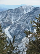 Here's a picture of the N gully on Griffith taken from the top of Mummy. This is a good intro to back-country in the Toiyabe and is easy to figure out.