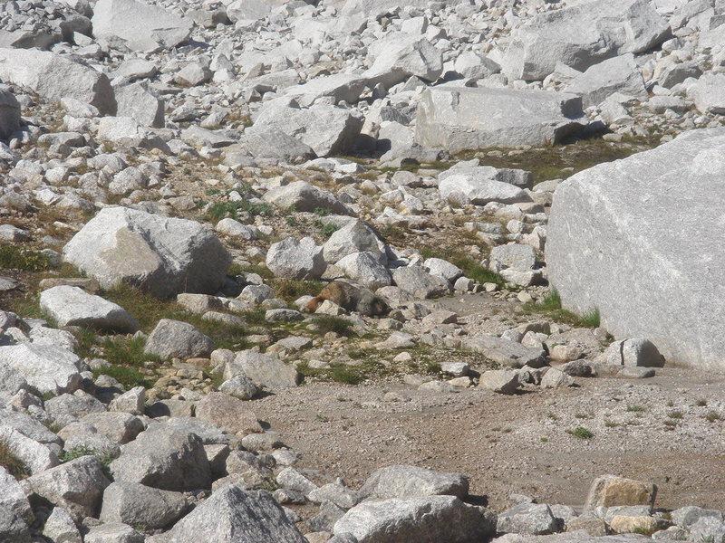 Rock Climbing Photo: Marmot, Bugaboos, British Columbia