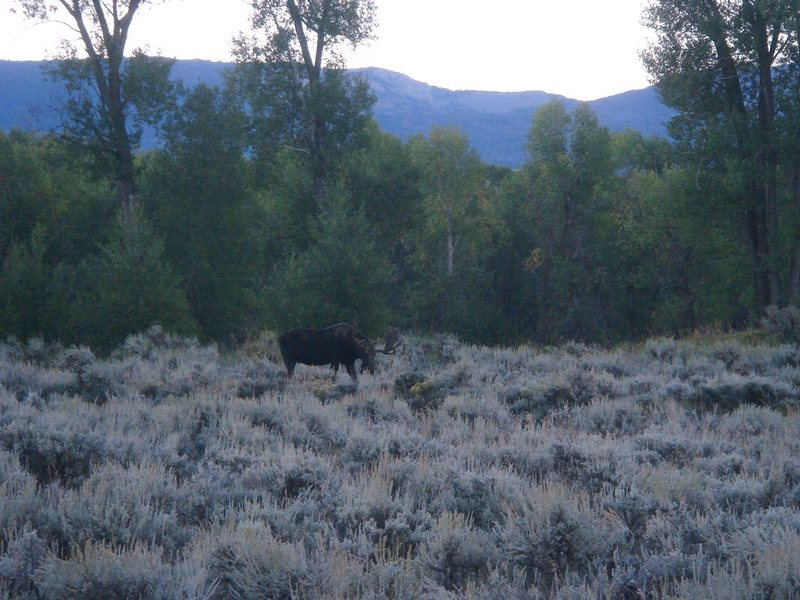 Rock Climbing Photo: Bull Moose, Tetons NP