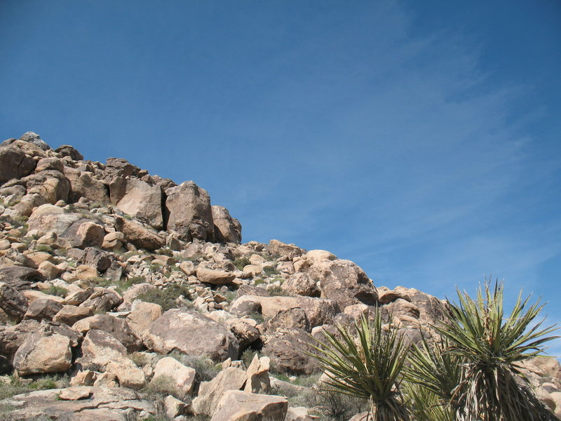Rock Climbing Photo: Tidbit (5.10a) from the desert floor, Joshua Tree ...