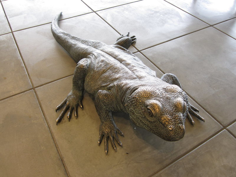 Giant Chuckwalla in the new visitor center ...
