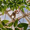 At work, rigging at Biosphere 2.