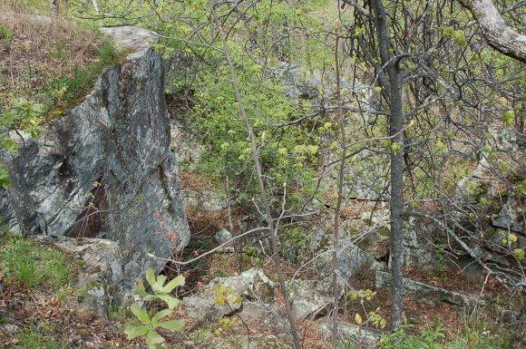 Rock Climbing Photo: Round Top Boulder.