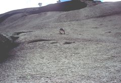 Rock Climbing Photo: Gary Molzan high on second pitch of Topographical ...