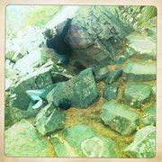 Rock Climbing Photo: Heel hook 1.