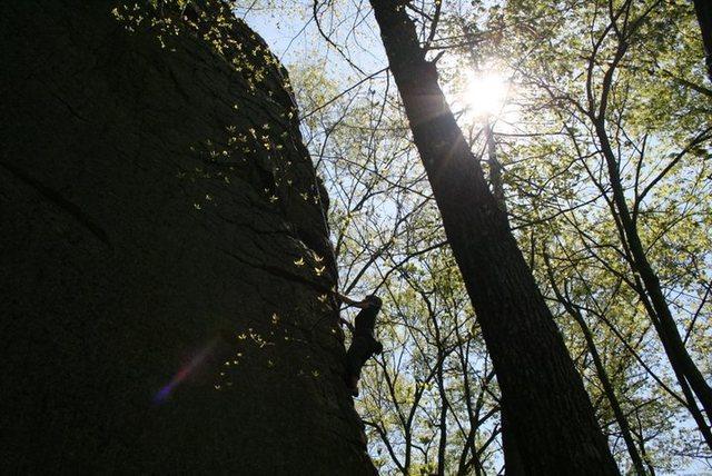 Rock Climbing Photo: Emilie heading up Mr.Bungle
