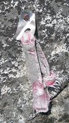 Rock Climbing Photo: Another beauty. The anchor on Twin Flakes doesn't ...