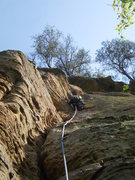 Rock Climbing Photo: Mary plugging pro on Whiteout.