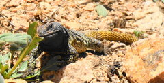 Rock Climbing Photo: unknown hungry reptile, arenales