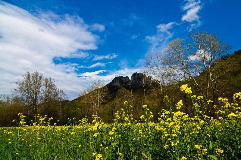Wild flowers (weeds?) in full spring bloom.
