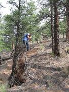 Rock Climbing Photo: Cutting trail.