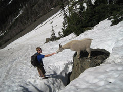 Rock Climbing Photo: Goat on Brothers