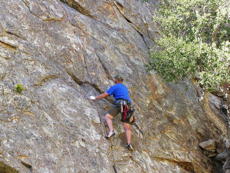 Rock Climbing Photo: tree root pic #1