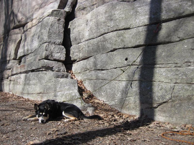 crag dog chillin