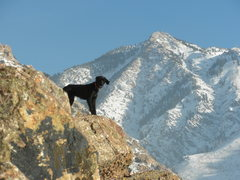 Rock Climbing Photo: Fuzcur!  Sends all the way up to 5.2, and is alpin...