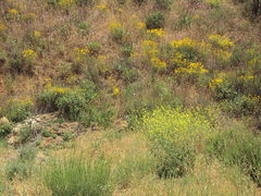 Rock Climbing Photo: Spring Flowers at Texas Canyon