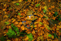 Rock Climbing Photo: The fall leaves are a great way to lose stuff!!!  ...