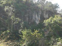 Rock Climbing Photo: Climbing in the jungle
