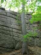 Rock Climbing Photo: Layback Cracks (left of the tree) and Dike Steps (...