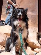 Rock Climbing Photo: Indian Creek Climber Dog. Am I on belay?
