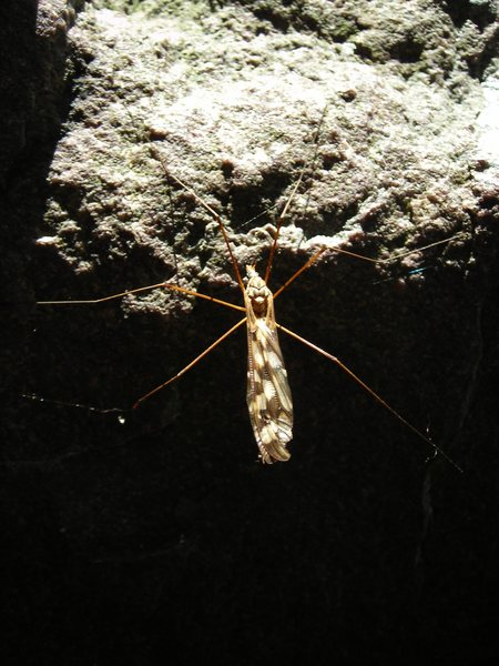 Rock Climbing Photo: Devil's Lake winged insect.  Hiding out in Major M...