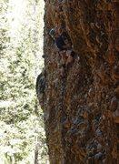 Rock Climbing Photo: Maple 6