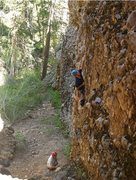 Rock Climbing Photo: Maple 7