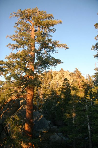 Big trees, big boulders at the West Rim