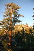 Rock Climbing Photo: Big trees, big boulders at the West Rim