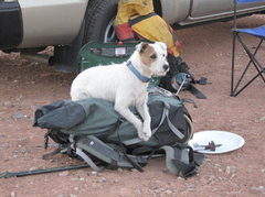 Rock Climbing Photo: Back to the pack protector