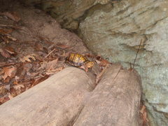 Rock Climbing Photo: I guess this is how the route got its name.  Our f...