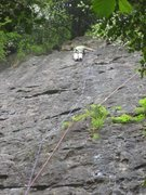 Rock Climbing Photo: Near the top of Laughing Cavaliers (photo by Phil ...