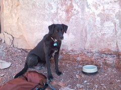 Rock Climbing Photo: My wonderful dog!