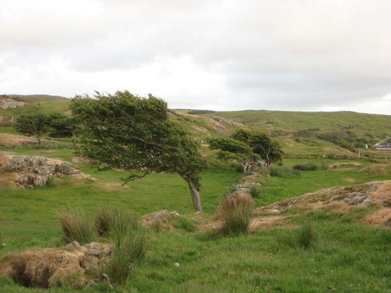 Trees in fields at the top of the cliff.  This place is windy!  (photo by Phil Ashton)