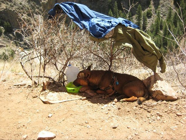 Rock Climbing Photo: Crag Dog Denali It was hot in Poudre