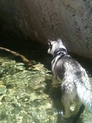 Rock Climbing Photo: Cooling off in the creek.